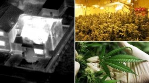 Cannabis Farm In Rented Property