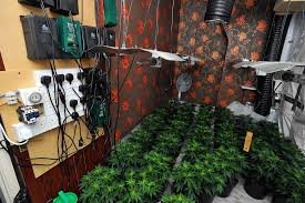 Cannabis Farms In Private Rented Sector Properties